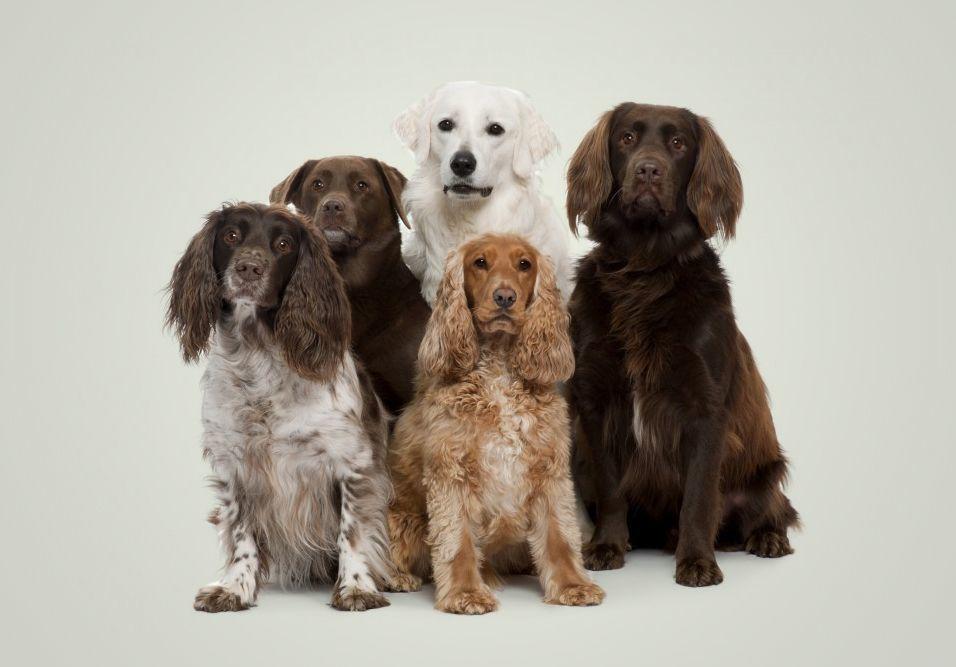 O que fazer para evitar conflitos com donos de animais de estimação