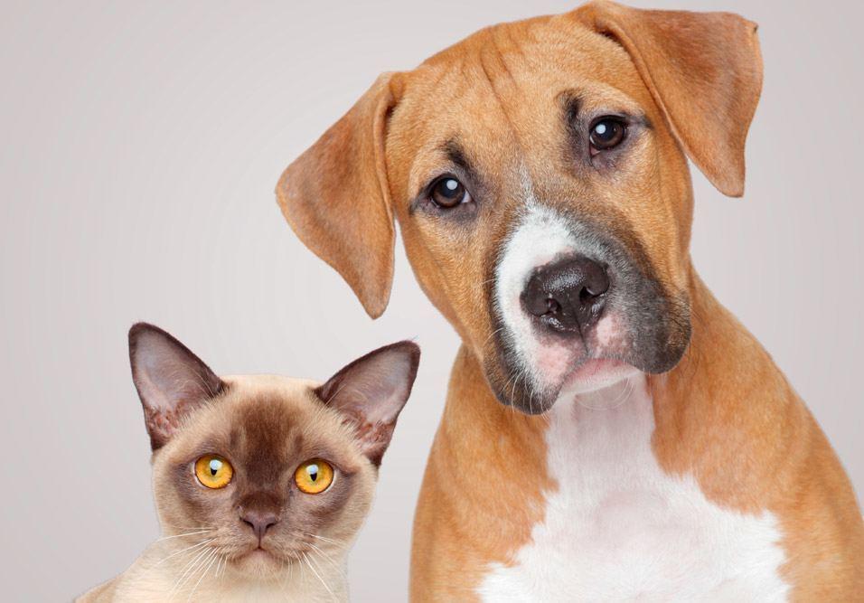 Conscientize moradores e donos de animais sobre as regras internas