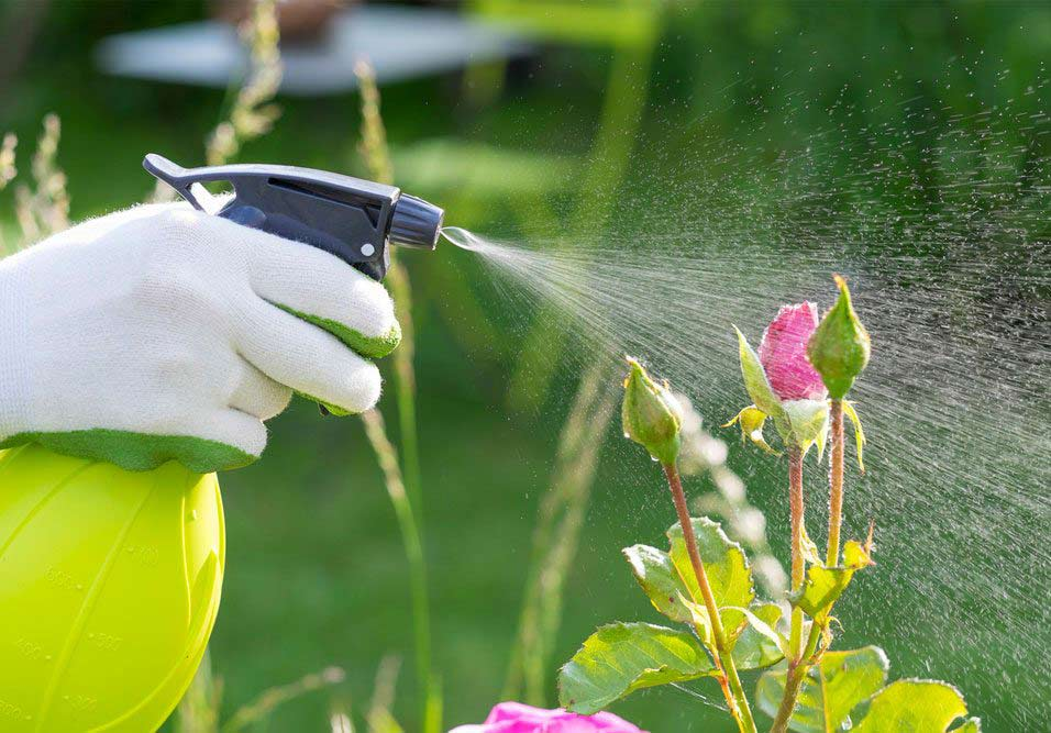 Plantas exigem cuidados manutenção contínuos