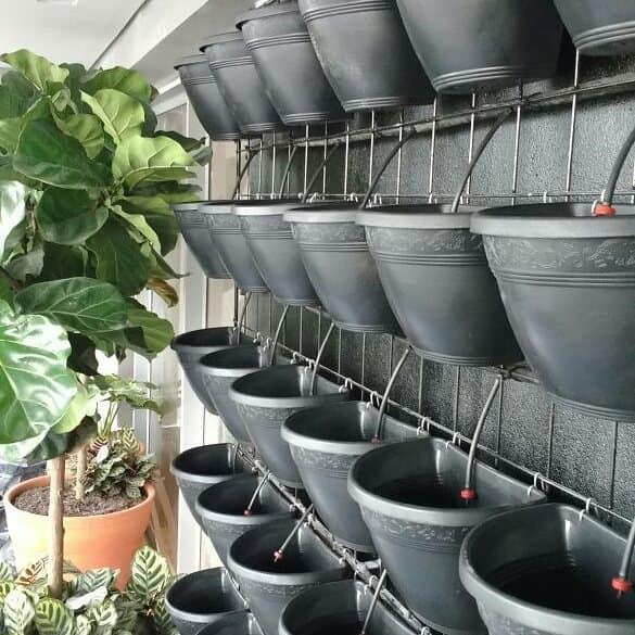 Foto - Jardim Vertical Irrigado automatizado