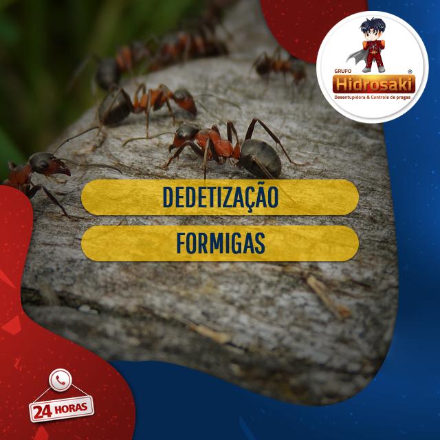 Foto - Dedetização de formigas de forma eficiente nos ambientes eliminando formigas e formigueiros através da dedetização corretiva e preventiva aplicada pelos funcionários especializados no assunto.