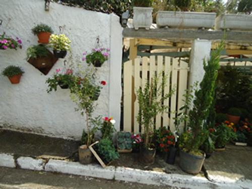 Foto - Espaço Verde Paisagismo